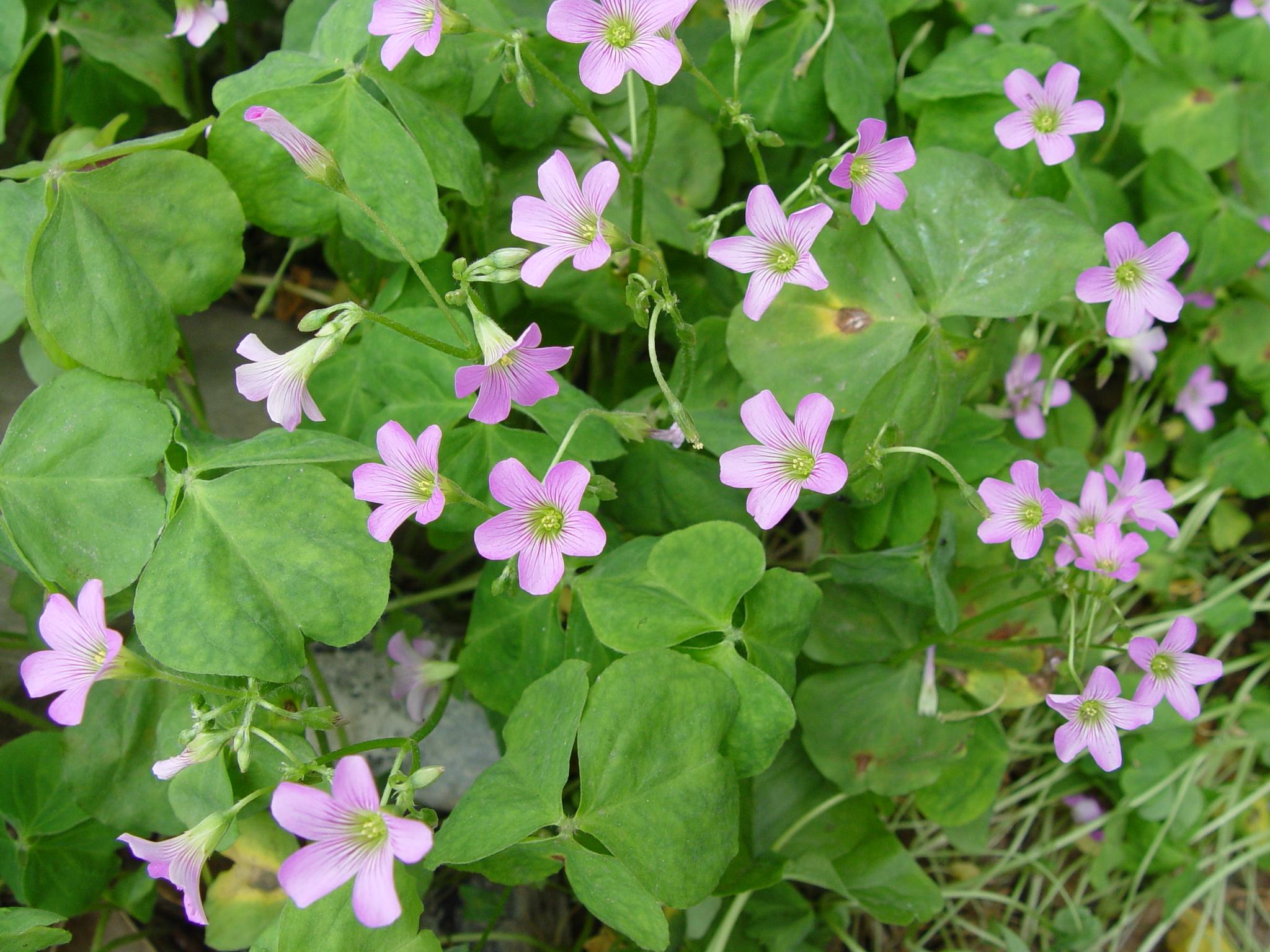 09 some pretty flowers in the farm cg mightylinksfo